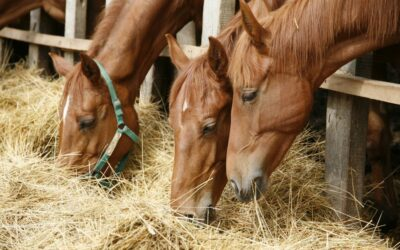The importance of understanding Equine Nutrition