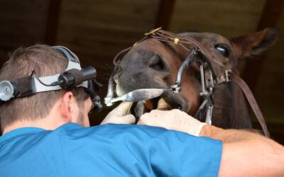 The Importance of Equine Dentistry